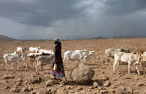 Young woman crosses the Kenya Ethiopia border with her cattle